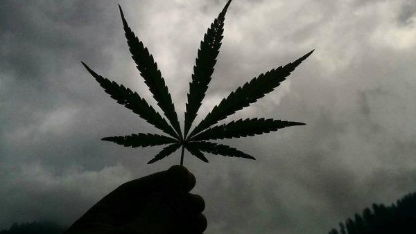 Marijuana Lovers Ready But City is Not